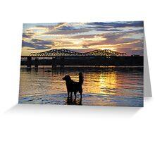Golden {Retriever} Sunset Greeting Card