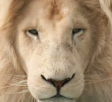 White Lion by TerryPatrick