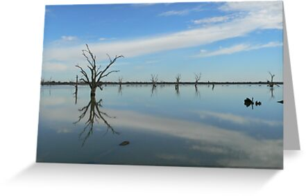 Murray River between Adelaide and Quorn by jmccabephoto
