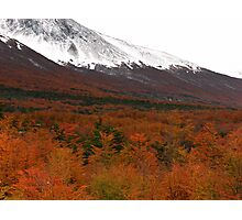 Mountains and forest outside Ushuaia Photographic Print