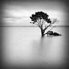 Alone at High Tide by Sean Farrow