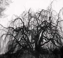 Wickedly Beautiful by Deborah Crew-Johnson