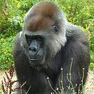 Lowland Gorilla by Meladana