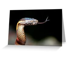 golden crown snake Greeting Card