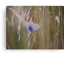 Blue Butterfly In field Canvas Print