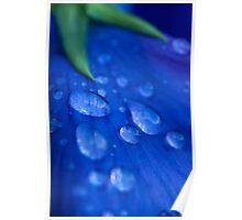 Raindrop Pansy Poster