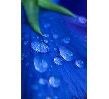 Raindrop Pansy Photographic Print