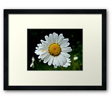 Spring flower and insect Framed Print