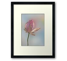 Lonesome Lotus Framed Print