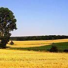 Field Flow by Deborah Crew-Johnson