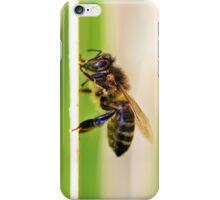 European Honey Bee  iPhone Case/Skin