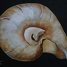 Nautilus Shell  by Christine Clarke