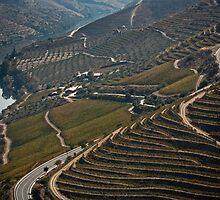 vineyards by nunper