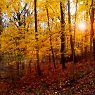 Autum Comes Softly by Curtiss Simpson