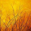 Morning Light by David  Guidas