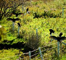Sunning Wild Turkeys......... Happy Thanksgiving by Larry Llewellyn