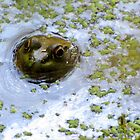 Froggy Face by Veronica Schultz