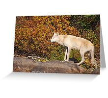 My First Timber Wolf Greeting Card