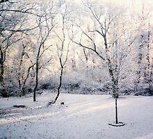 Winter Dusk by Sandra Gale