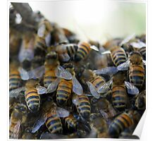 Honey Bees Swarming Poster