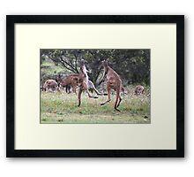 Kangaroos tail standing Framed Print