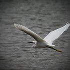 Flying Great Egret  by Saija  Lehtonen