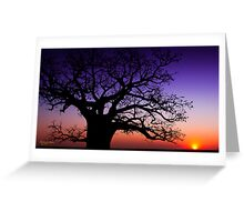 Boab Sunset Greeting Card