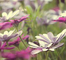 Spring Haze by yolanda