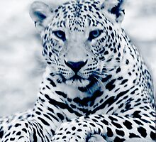 cheetah - iPhone case by Sajeev Chandrasekhara Pillai