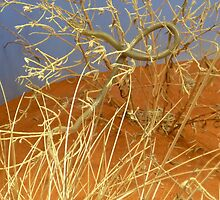 Alice Springs Desert Park- Spinifex legless lizard by sarbi