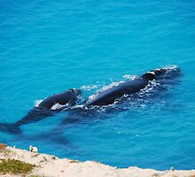 Southern Right Whale and calf by Ian Berry