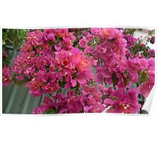 Alice Springs Flowers (vibrant pink) Poster