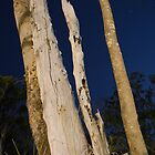 Scary faced Dead Tree at Night by bloke28