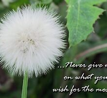 """Never Give Up On What You Wish For The Most"" by Toni Kane"