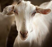 0908 Taking the Goat 3 by DavidsArt