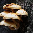 Mushrooms and Tree in Autumn Day by Antanas