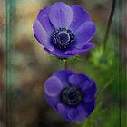 A Pair of Anemones by Elaine Teague