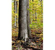 The Woods - Sharbot Lake Ontario Photographic Print