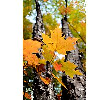 Fall Maple Leaves - Sharbot Lake Ontario Photographic Print