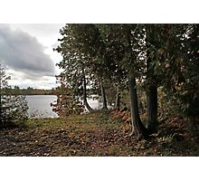 Cedars by the Lake - Sharbot Lake Ontario Photographic Print