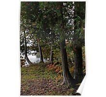 Cedars - Sharbot Lake Ontario Poster