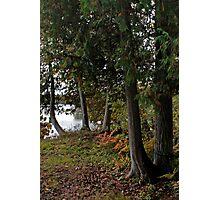 Cedars - Sharbot Lake Ontario Photographic Print
