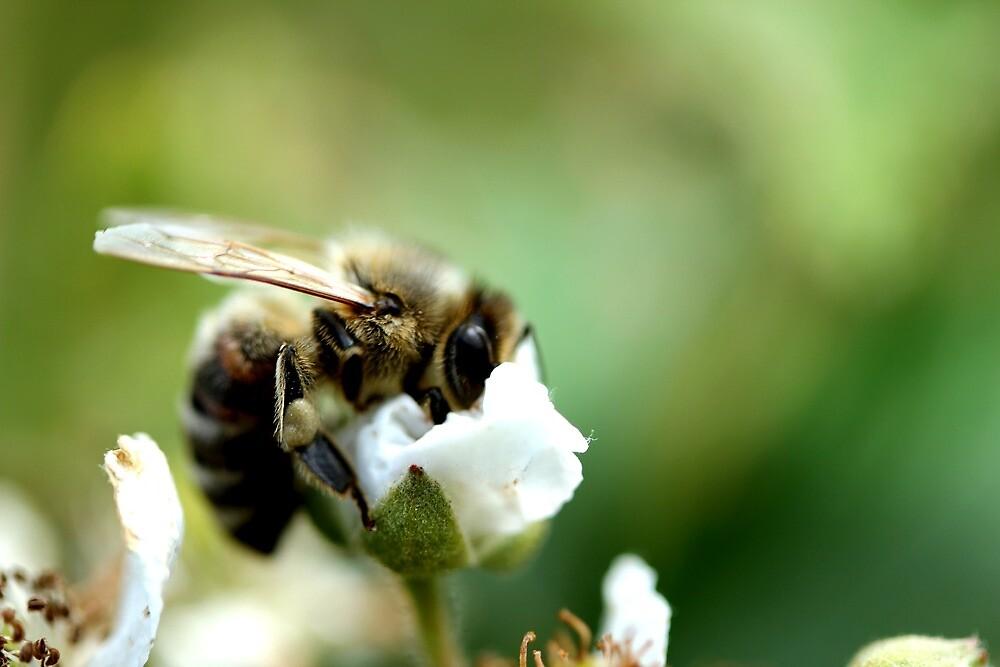 blur honey bee by Teka77