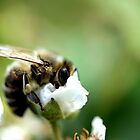 blur honey bee by Teka77