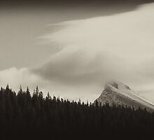 Banff Beauty: The Forests of Mt. Norquay by Ryan Davison Crisp