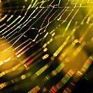 Golden Web iPhone case by Rachael Talibart