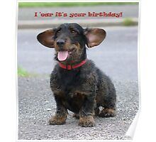 Sunsong Zephyr - wirehaired Dachshund Poster
