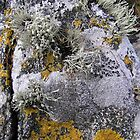 Lichen on rock, Traigh Ear,  Grenitote, North Uist, Outer Hebrides by epgaskell
