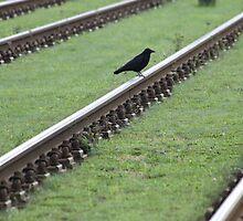 railway crow by Teka77