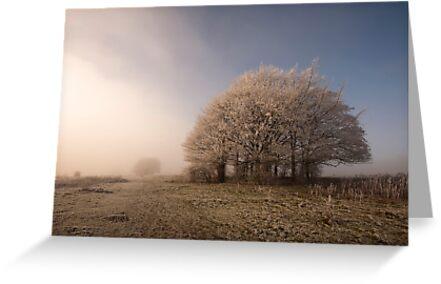 Misty Morn by Anne Gilbert